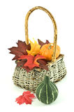 Autumn theme. Miniature pumpkins and autumn leaves in woven basket on white background in vertical format Royalty Free Stock Photo