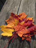 Autumn theme. Atumn theme still life with maple leaves Stock Photo