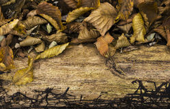 Autumn theme Royalty Free Stock Photos