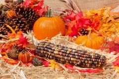 Autumn theme with corn Royalty Free Stock Image