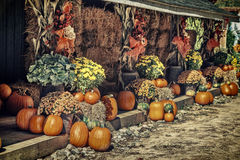 Autumn Theme Display Royalty Free Stock Image