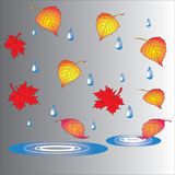 Autumn theme, fallen leaves and puddles. The theme of autumn, fallen leaves, puddles and raindrops Royalty Free Stock Photos