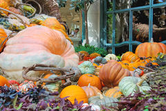 Autumn theme in a greenhouse at Bellagio Hotel in Las Vegas Stock Photos