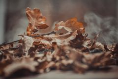 Autumn theme with leafs Royalty Free Stock Image