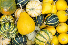 Autumn theme with many gourds, pumpkins Stock Photo