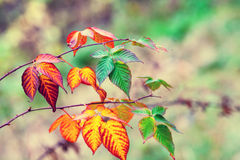 Autumn theme Royalty Free Stock Photos