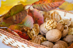 Autumn theme-Walnuts in a basket. Royalty Free Stock Photo