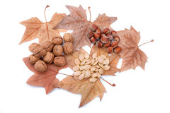 Autumn theme with yellow leaves, nuts and pumpkin seeds. Stock Image