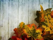 Autumn Themed Background fotografia stock
