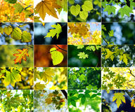 Autumn themed collage Royalty Free Stock Photos