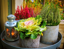 Autumn themed flowers and candle lamp. On table in garden Royalty Free Stock Photography