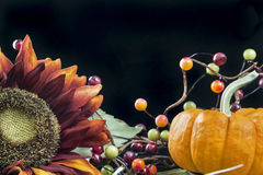 Autumn themed still life with a black background Royalty Free Stock Image