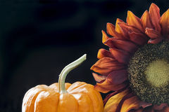Autumn themed still life with black background Stock Photography