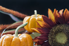 Autumn themed still life with black background Stock Photos