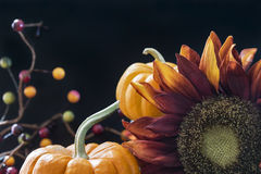 Autumn themed still life with black background Royalty Free Stock Image