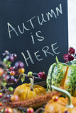 Autumn themed still life with a chalkboard Royalty Free Stock Photography