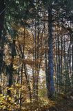 Autumn in the thick woods Royalty Free Stock Image