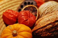 Autumn things composition royalty free stock image