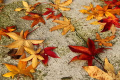 Autumn. Is a third season of the year Royalty Free Stock Photography