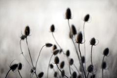 Autumn thistles Stock Images