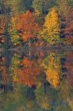 Autumn Thornton Lake Stock Images