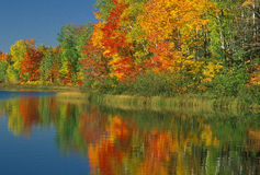 Autumn Thornton Lake Royalty Free Stock Photo