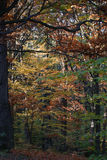 Autumn timber land Royalty Free Stock Images
