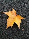 Autumn Time Imagen de archivo libre de regalías