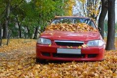 Autumn Time Stockfotografie