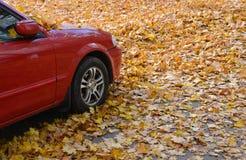 Autumn Time Stockbilder