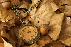 Autumn Time. A pocket watch on some dead oak leaves and acorns for the changing of the autumn season Royalty Free Stock Images