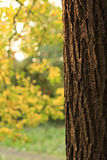 Autumn time. Colors of the golden autumn Royalty Free Stock Photo