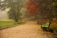 Autumn time. Park in an autumn time Stock Photography