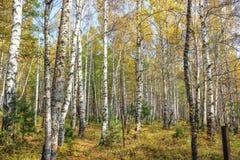 Autumn Time Fotografía de archivo libre de regalías