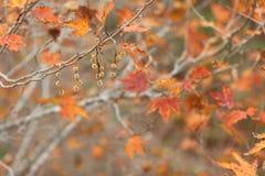 Autumn Time Background Fotografia de Stock