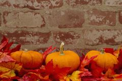 Autumn Time Background with pumpkins stock photography