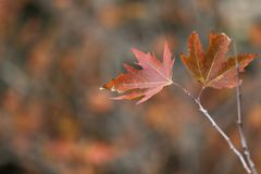 Autumn time background Royalty Free Stock Images