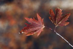 Autumn time background Royalty Free Stock Image