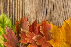 Autumn Time Background, Some fall leaves on weathered wood with copy space for your text. Autumn Time Background, Some fall leaves on weathered wood with copy Royalty Free Stock Photography