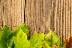 Autumn Time Background, Some fall leaves on weathered wood with copy space for your text. Autumn Time Background, Some fall leaves on weathered wood with copy Stock Photos