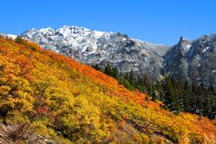 Autumn time in Colorado near Ourey Royalty Free Stock Images