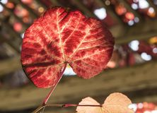 Autumn time. Colorful garden in Warsaw. Polish autumn. royalty free stock photo
