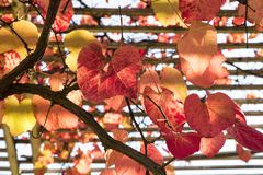 Autumn time. Colorful garden in Warsaw. Polish autumn. royalty free stock image