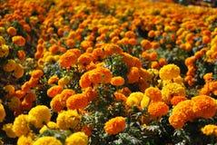 Autumn Time Flowers Lizenzfreies Stockfoto