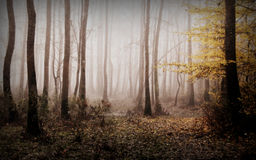 Autumn time in forest. Early  autumn morning in the forest Stock Images