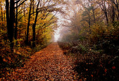 Autumn time in forest. Forest road in autumn time with a autumn colors Royalty Free Stock Photos