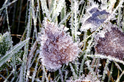 Autumn time frost on grass and leaf. Autumn time frost with ice crystals on grass and leaf Royalty Free Stock Images