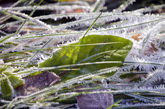 Autumn time frost with ice crystals on grass Royalty Free Stock Photography