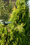 Cutting bushes / trimming the bushes Royalty Free Stock Image