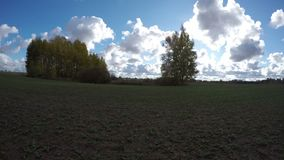 Autumn time golden aspen grove on green field and clouds, time lapse stock video